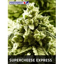 Super Cheese Express (5fem) POSITRONICS