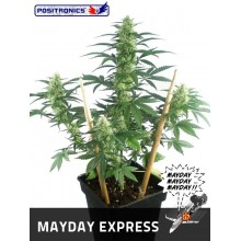 May day Express (1ud,3uds y 5uds) POSITRONICS
