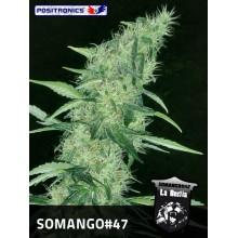 Somango 47 (1ud,3uds y 5uds) POSITRONICS