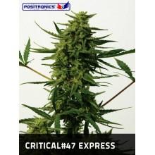 Critical nº47 Express (5fem) POSITRONICS
