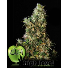 High Level (3uds,6uds, y 9uds) EVA SEEDS