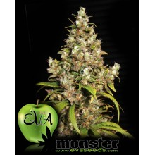 Monster (3 und) EVA SEEDS
