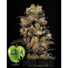 Pink Plant (3 und) EVA SEEDS