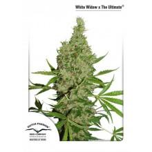 White Widow X The Ultimate Regular (10 und) DUTCH PASSION
