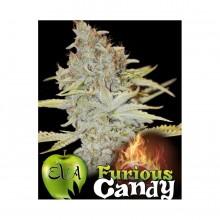 Furious candy eva seeds