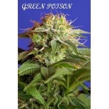 Green poison (3uds,5uds,25uds y 100uds)Sweet Seeds