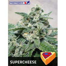 Super Cheese (1ud,3uds y 5uds) POSITRONICS